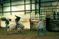 Todd Fox riding his first bull.